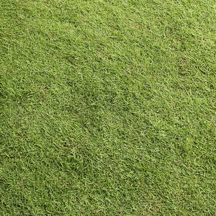 草地纹理背景