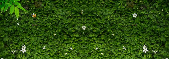 绿草背景墙背景