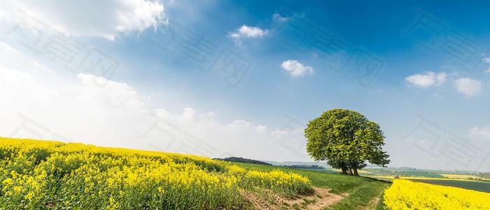 蔚蓝天空春意美好背景图