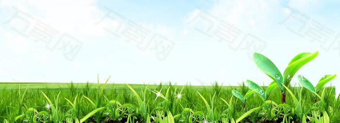 绿色 草地背景
