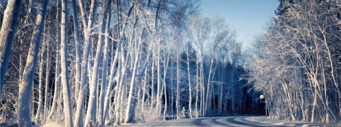 唯美树林风景海报