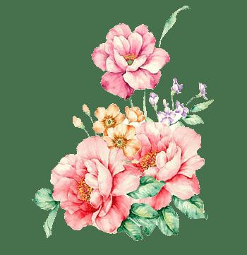 粉色手绘花牡丹花图粉色花堆