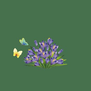 淡紫色蝴蝶兰花朵