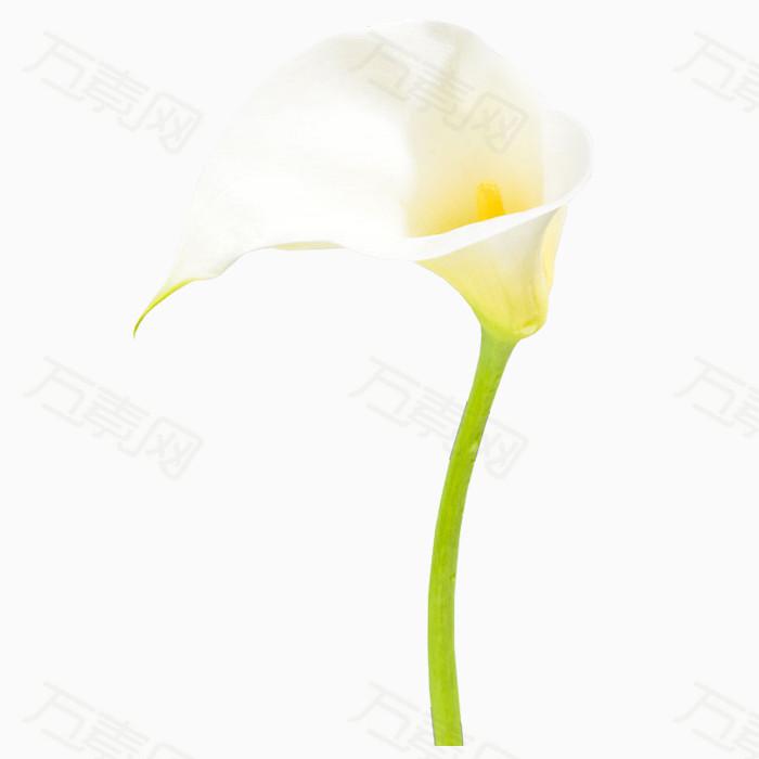 万素网提供漂亮装饰花儿PNG免抠图素材花卉植物素材。该素材体积0.12M,尺寸700*700像素,属于花卉植物分类,格式是png,多行业可用,图片可自由编辑用于你的创意当中。由万素网用户上传,点击右侧下载按钮就可进行花卉植物高速下载。浏览本张作品的你可能还对树叶,枫叶,叶子,花叶,新鲜花朵,装饰花草,嫩叶,草叶,鲜绿色,小花,花朵,绽放的花瓣,鲜艳的花相关素材感兴趣。