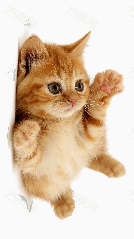 可爱猫咪                 万素网提供可爱猫咪png设计素材,背景