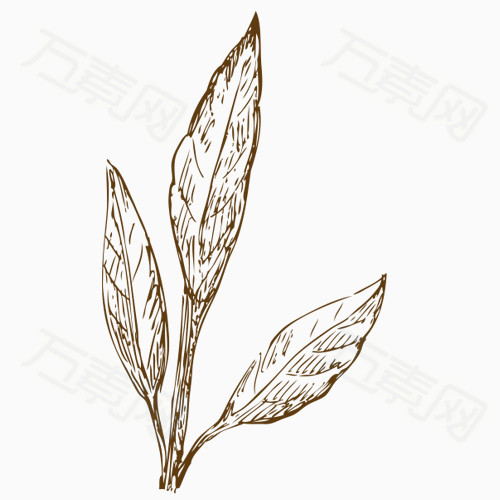 手绘素材 植物png 叶子 卡通 纹理 条纹 复古