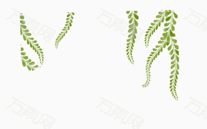 手绘藤蔓叶 绿色叶子 手绘绿叶 绿色藤蔓叶