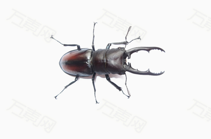 免抠素材虫子图片