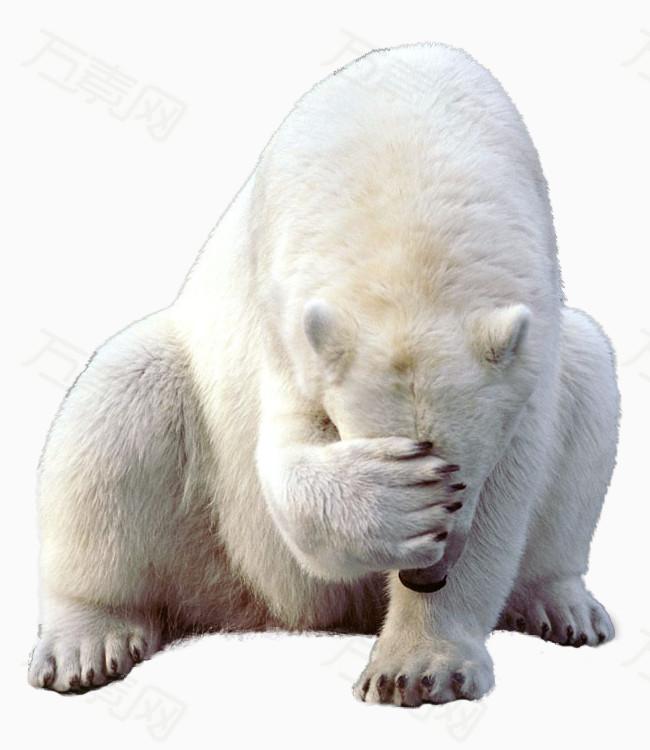 北极熊图片免费下载_动物_万素网