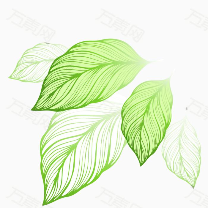 矢量绿叶装饰素材  3578 万素网提供矢量绿叶装饰素材png设计素材
