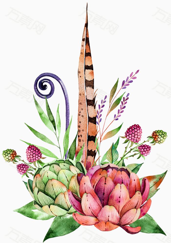 多肉植物图片免费下载_卡通手绘_万素网