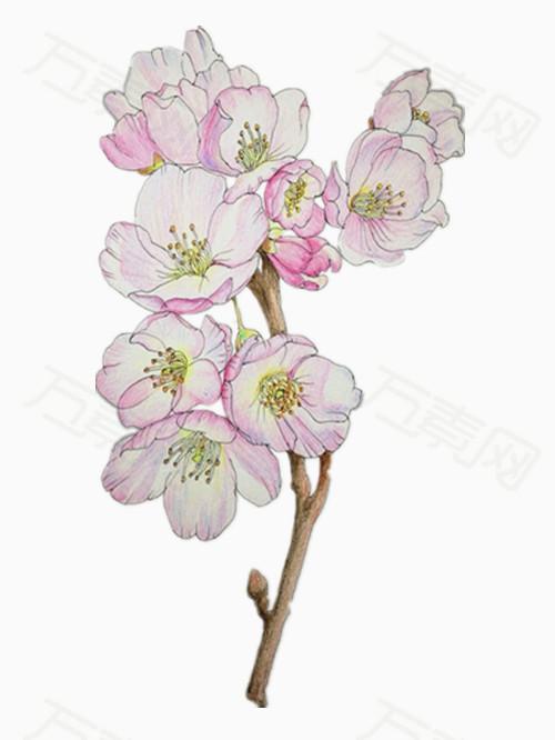 万素网提供彩铅手绘的海棠花png设计素材,背景素材