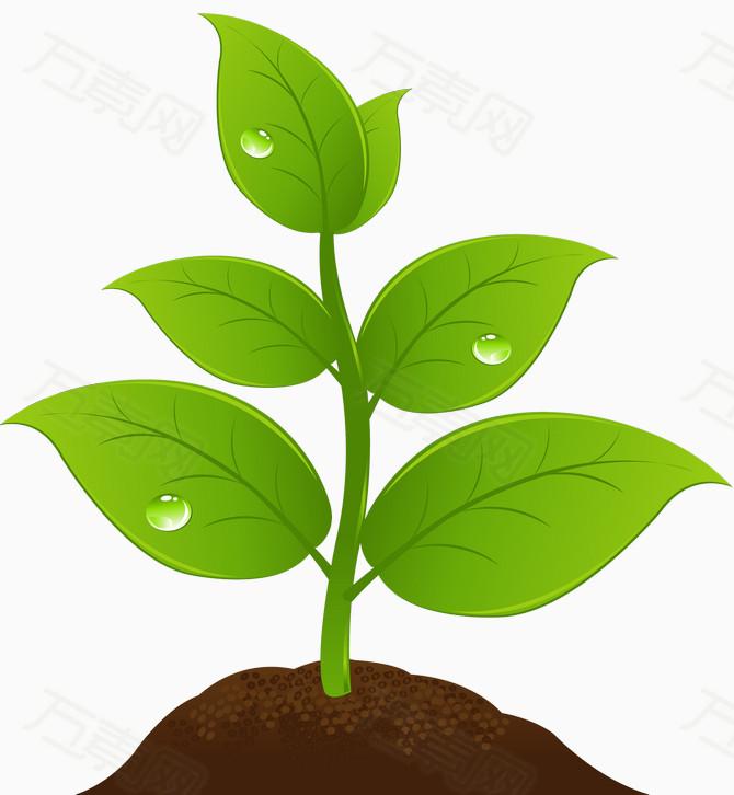 发芽的小树苗                 万素网提供发芽的小树苗png设计图片