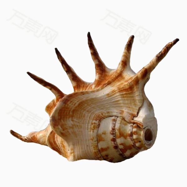 产品实物 形状怪异的海螺  万素网提供形状怪异的海螺png设计素材