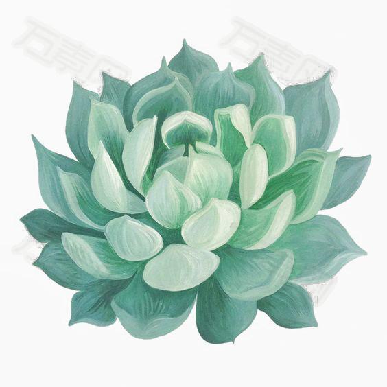 水彩多肉植物图片免费下载_卡通手绘_万素网