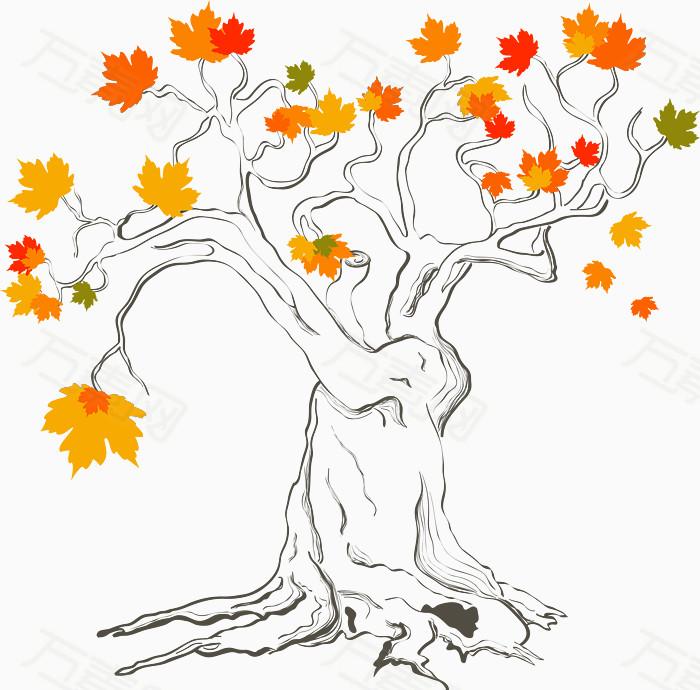 手绘线条枫树矢量图