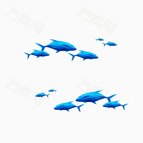 卡通逼真鲸鱼图片免费下载_卡通手绘_万素网