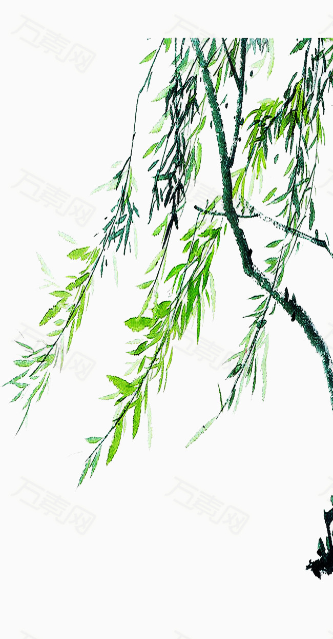 手绘水彩柳树叶