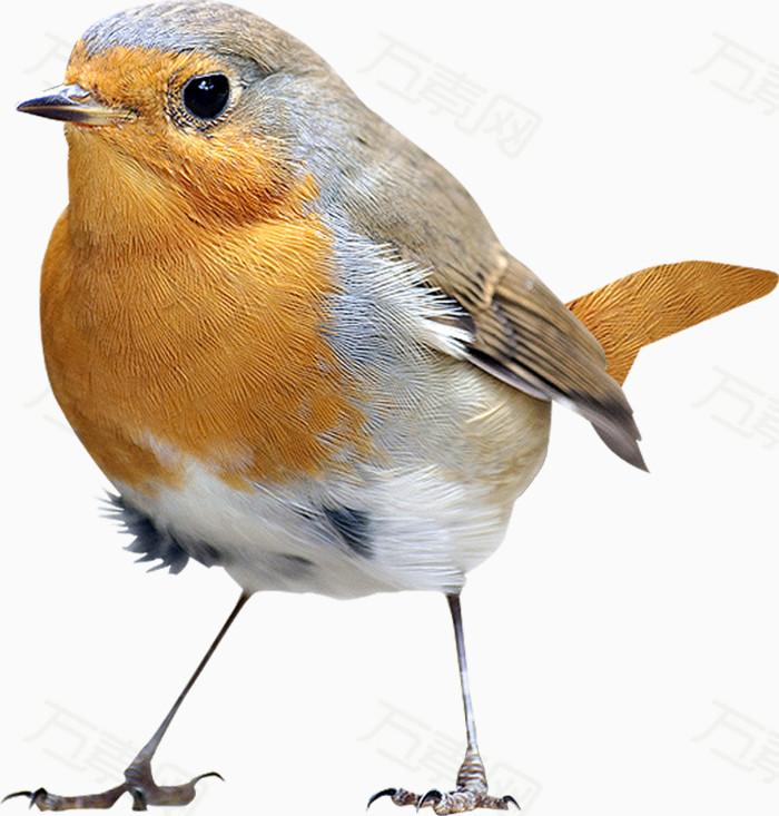 一只小鸟                 万素网提供一只小鸟png设计素材,背景