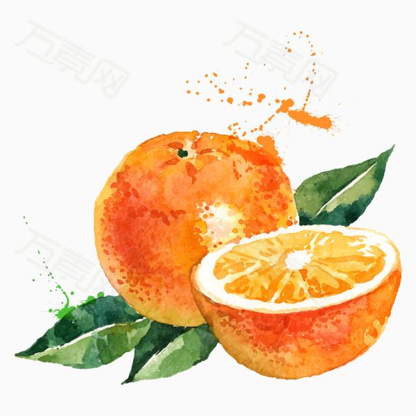 水彩手绘橙子png素材