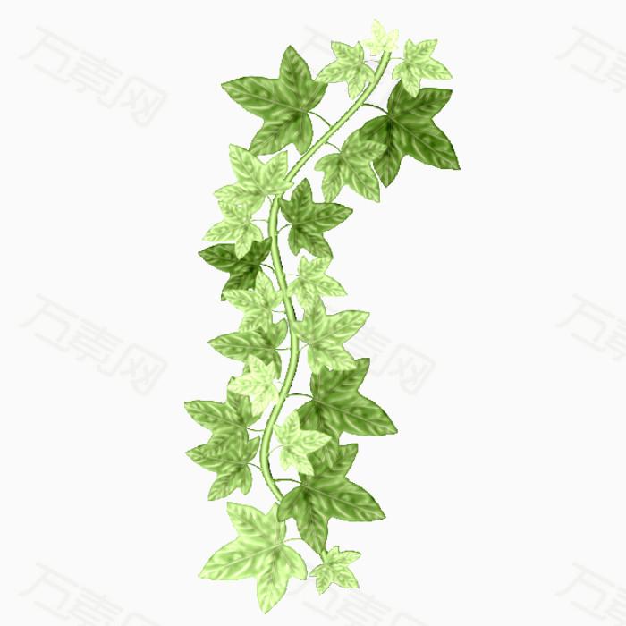 植物绿叶png免抠图素材