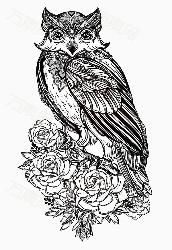 猫头鹰 花朵 线条 手绘 简约 猫科动物
