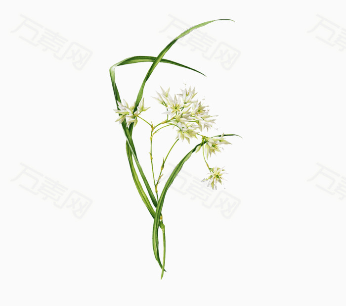 万素网 素材分类 手绘鲜花免抠图