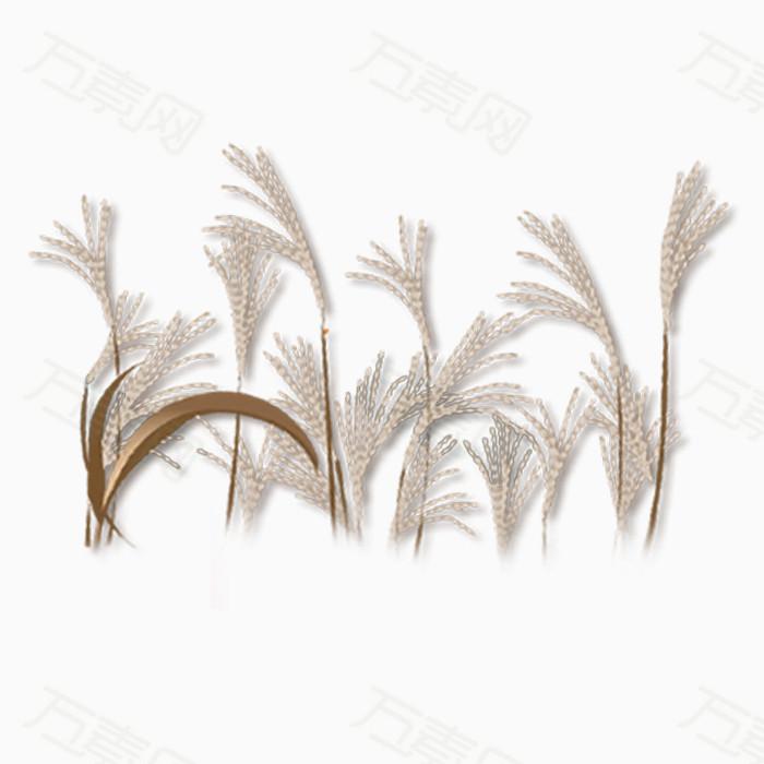 中国风草植物png免抠图素材