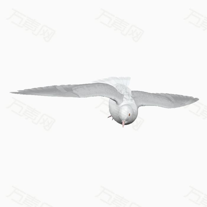 鸽子免抠png素材