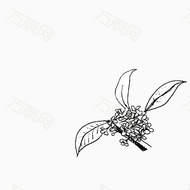 简笔画桂花花瓣
