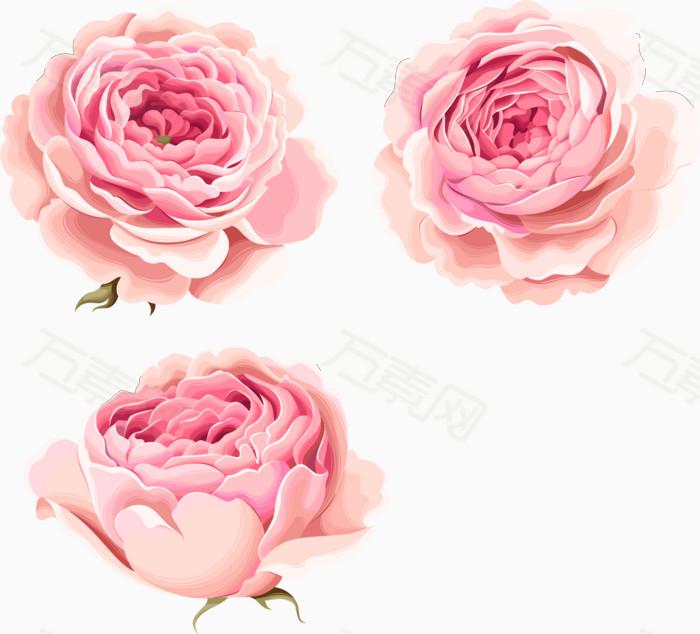 手绘花朵 唯美 粉色牡丹花 水彩 鲜花 玫瑰花