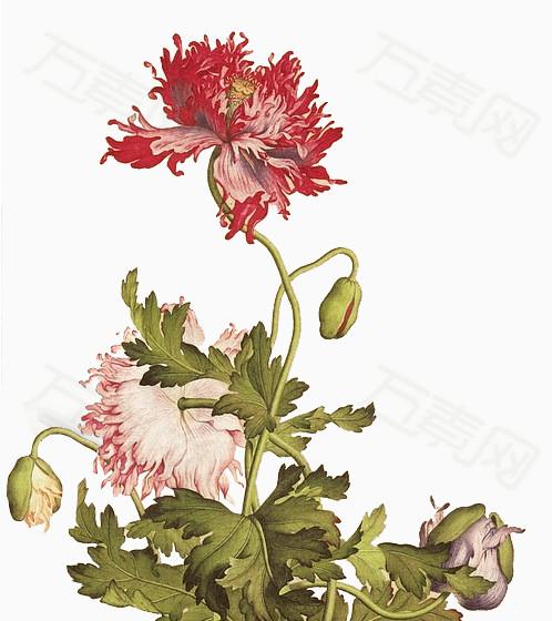 万素网提供手绘花朵素材植物花卉素材 卡通精美花束png