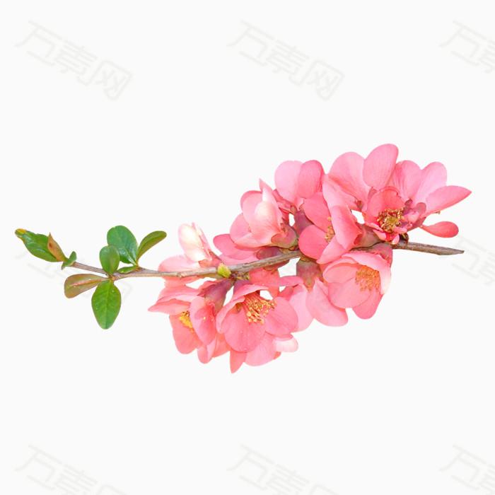 花儿png免抠图素材