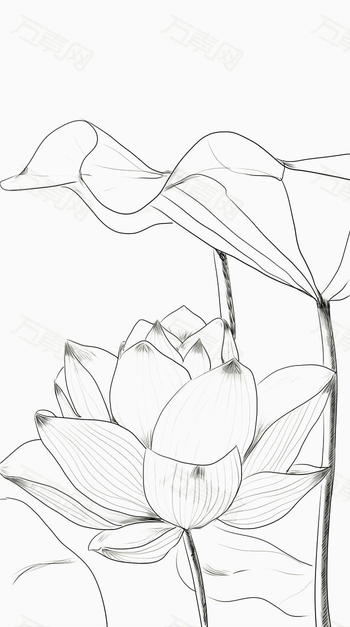 清新手绘线稿花卉荷花莲花