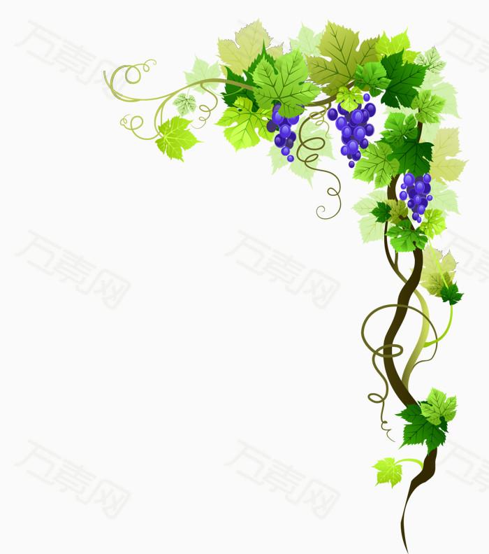 万素网 素材分类 矢量爬藤植物葡萄  10076 万素网提供矢量爬藤植物葡