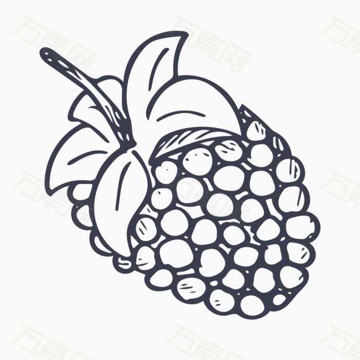 手绘线稿 线稿 桑葚 水果 实物