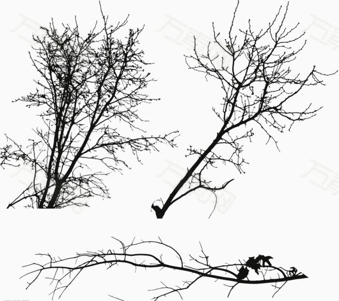 黑色专业树枝韩国人的园林设计影子图片