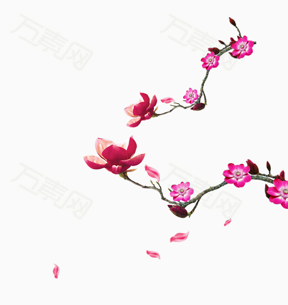 手绘桃花枝图片免费下载_花卉植物_万素网