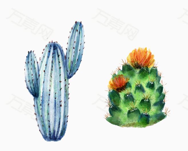 手绘仙人掌  手绘绿色和蓝色仙人掌  仙人掌  唯美手绘仙人