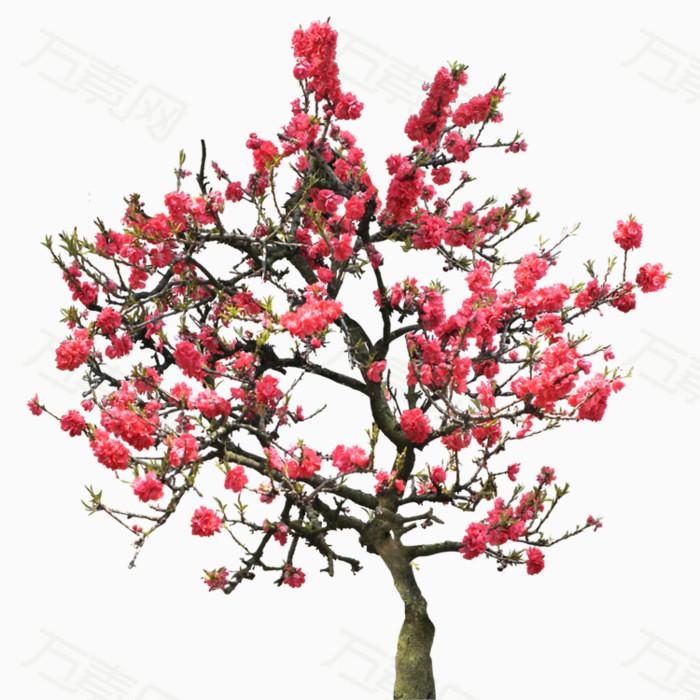 桃花png免抠图素材