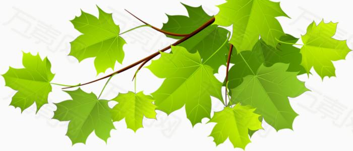 绿色藤蔓叶子