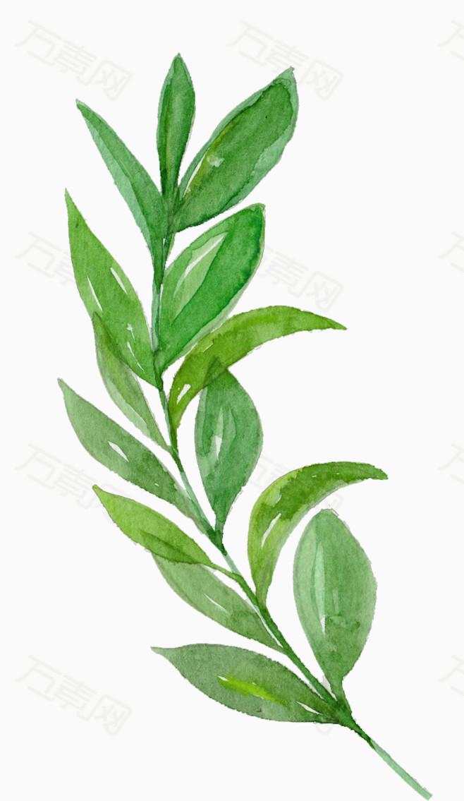 橄榄枝 和平 植物 卡通手绘