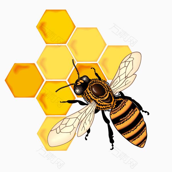 可爱卡通手绘 蜜蜂 蜜蜂采蜜