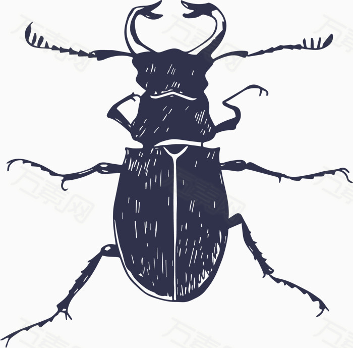 天牛 昆虫 卡通 手绘 素描 插画 漫画