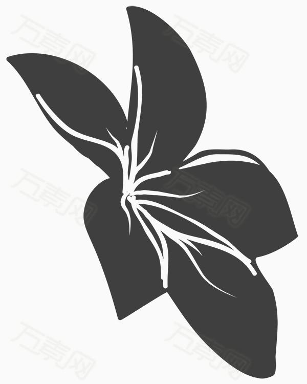 黑白花朵   黑白花卉    手绘花朵    手绘