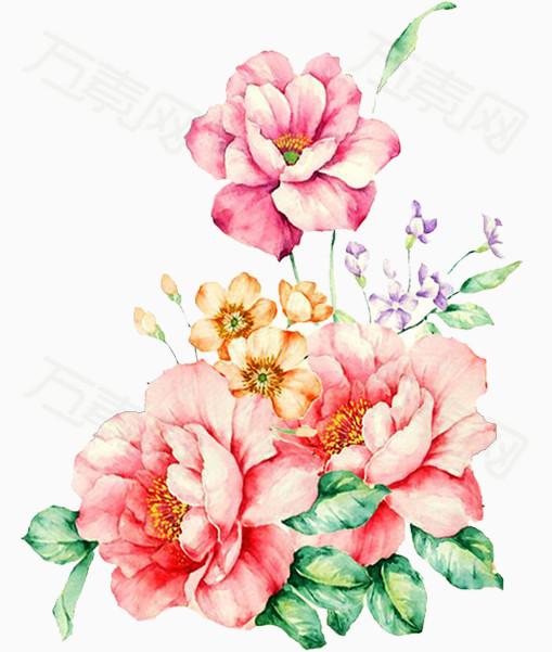 山茶花手绘插画图片免费下载_花卉植物_万素网图片