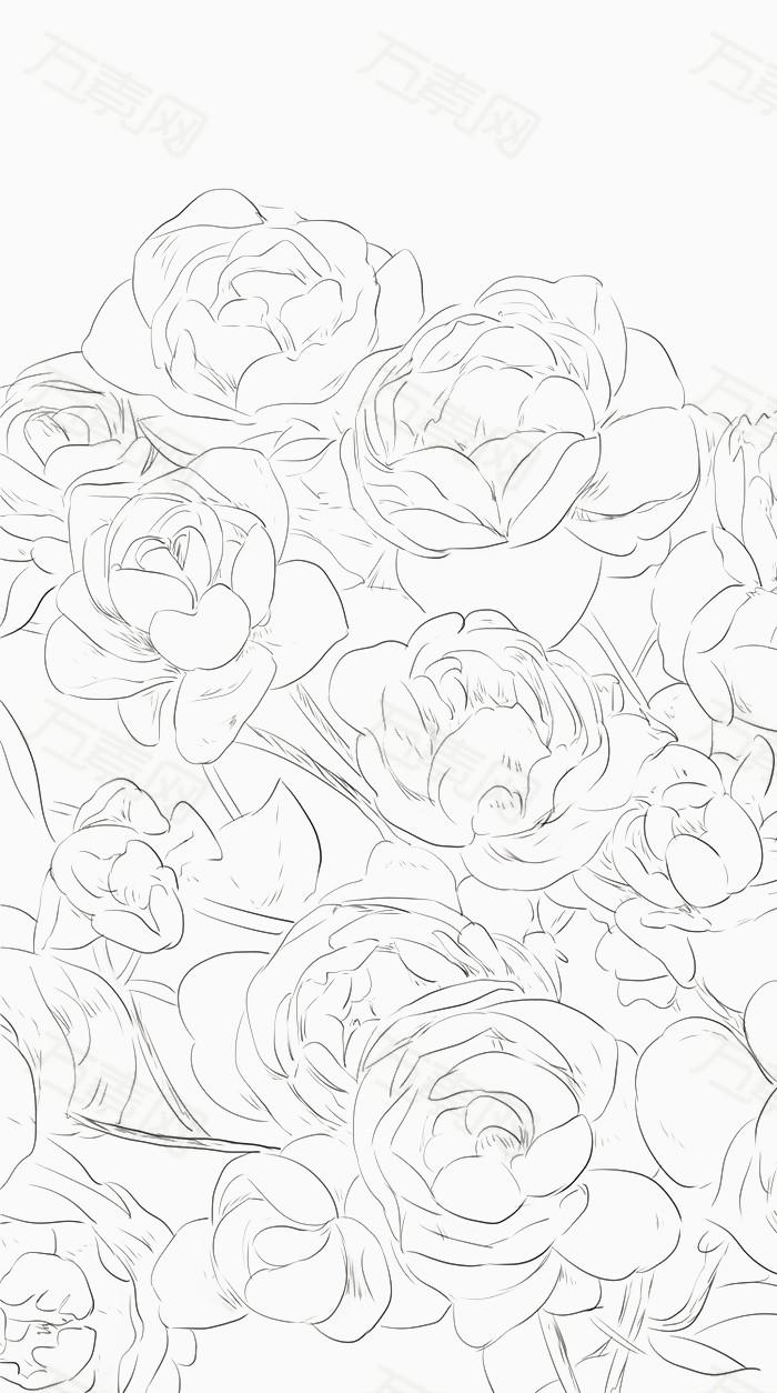 清新手绘线稿花茉莉花  万素网提供清新手绘线稿花茉莉花png设计素材