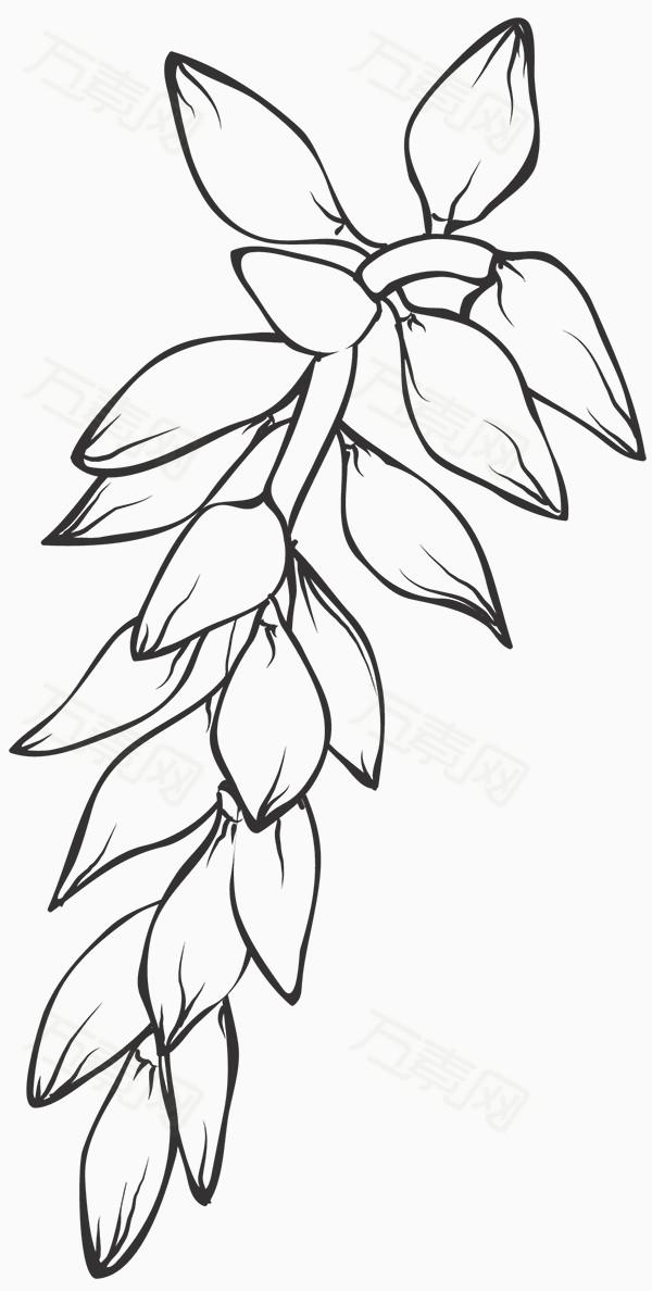 手绘黑白植物图片