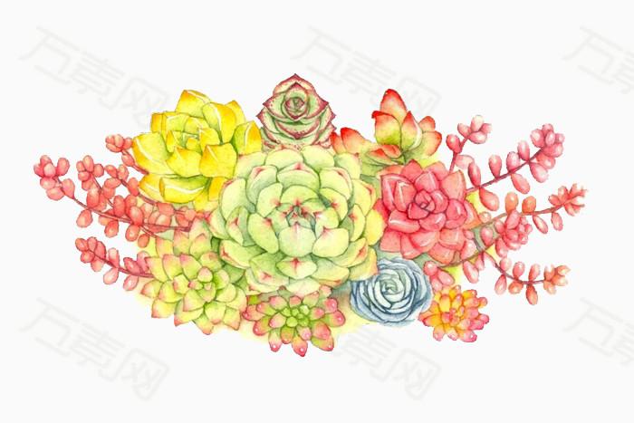 卡通多肉植物图片免费下载_卡通手绘_万素网