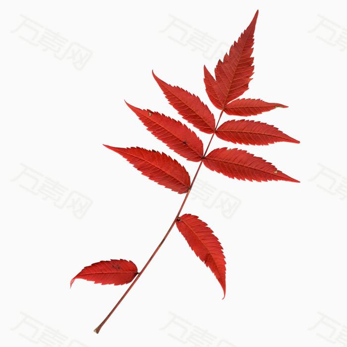 叶子树叶png免抠图素材